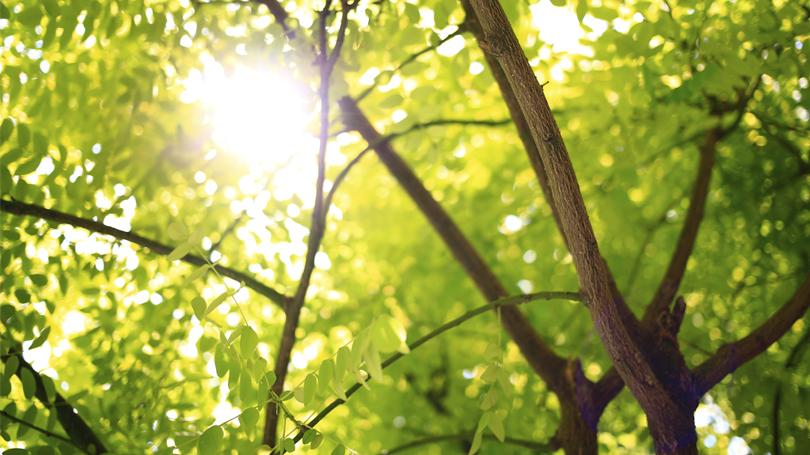 trees-sunlight_810x455.jpg