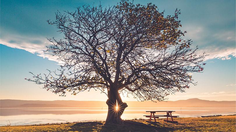 silhouette of tree in sunrise