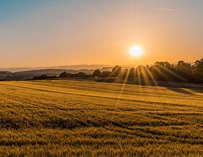 sunrise over fields
