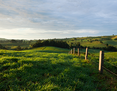 Green meadows and fence